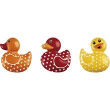 Blister Duck