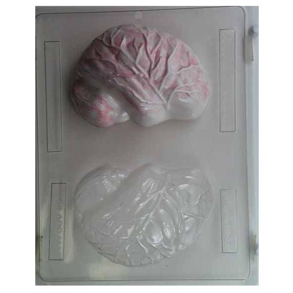3d mold, human brain